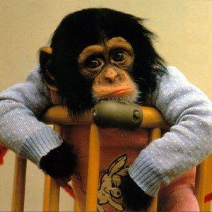 monkey_tired luca stano blog attore recitazione cinema