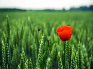 fiore luca stano blog attore